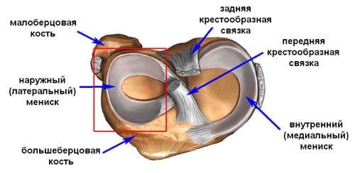 liigeste ravi langemisel liigeste haigused rottidel