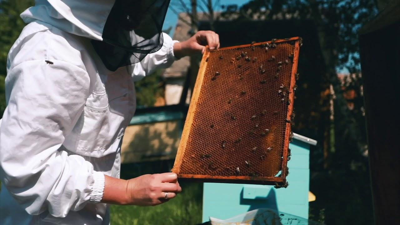 mesilaste ravi liigeste sustava juudi poletik