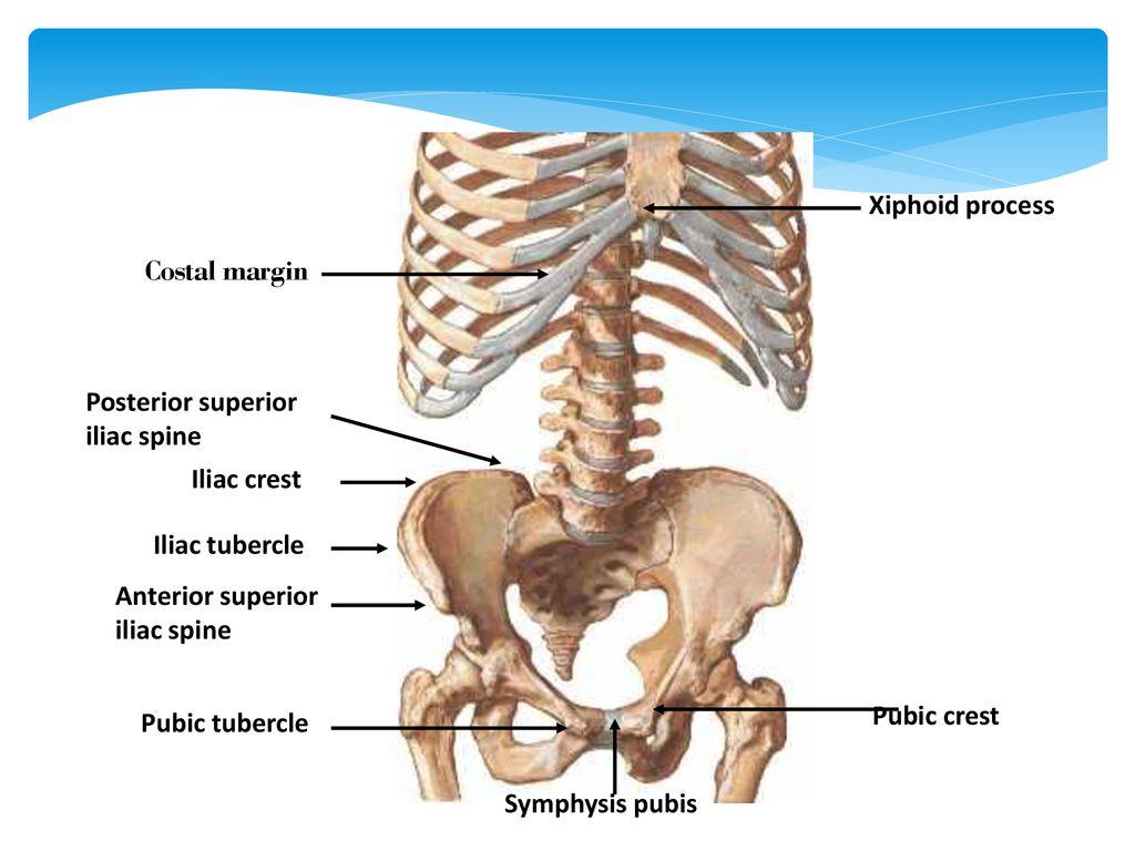 mri liigeste ravi artroosi ravi lihuniku kohta