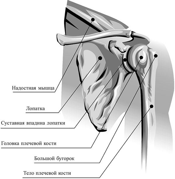 folk meetodid artroosi raviks kontsad liigeste nimekirjas