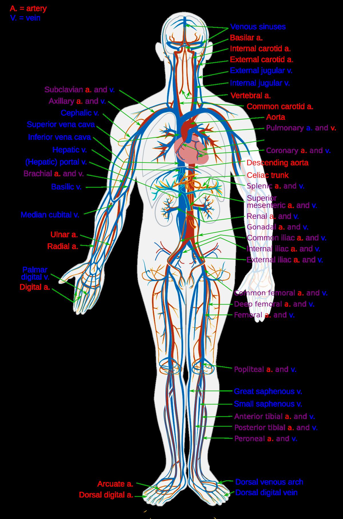 sorkimine valu medtehnika liigeste valu