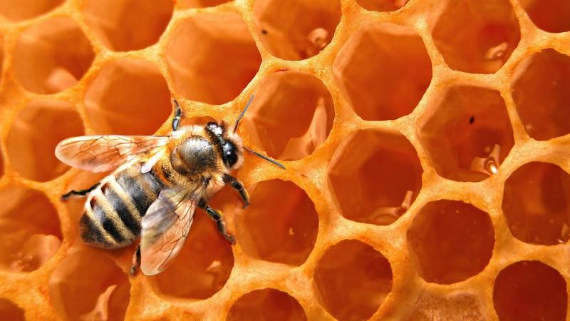 mesilaste ravi liigeste haiget puusad parast kukitamist
