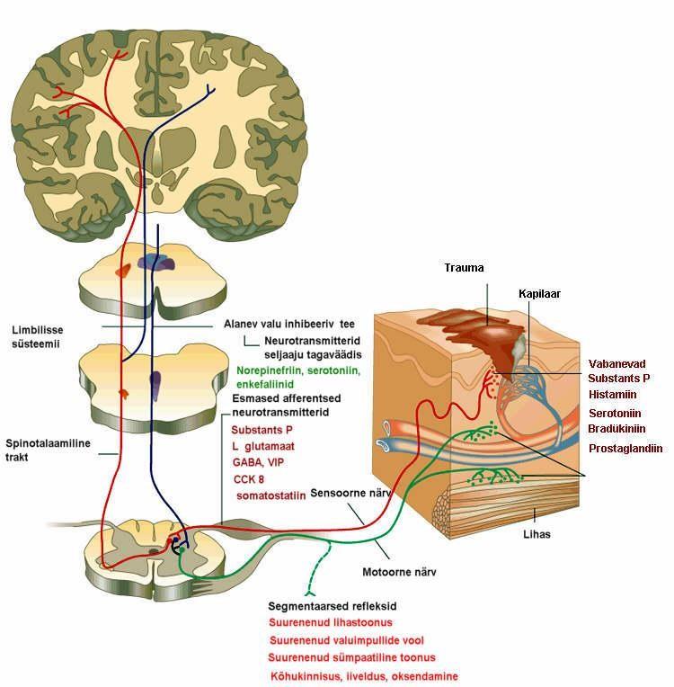 kate metalli liigeste ravi salv liigeste ja ligamentide ulevaateid