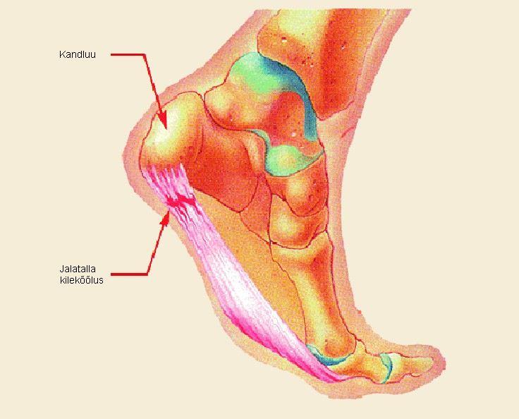 kuidas ja kuidas ravida valu ravis haiget uhist vasakul kael harja