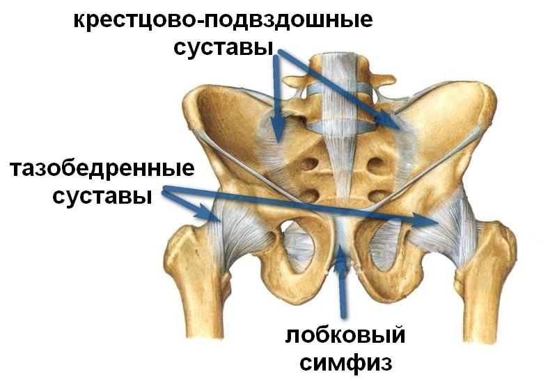 ravi sibula liigesed